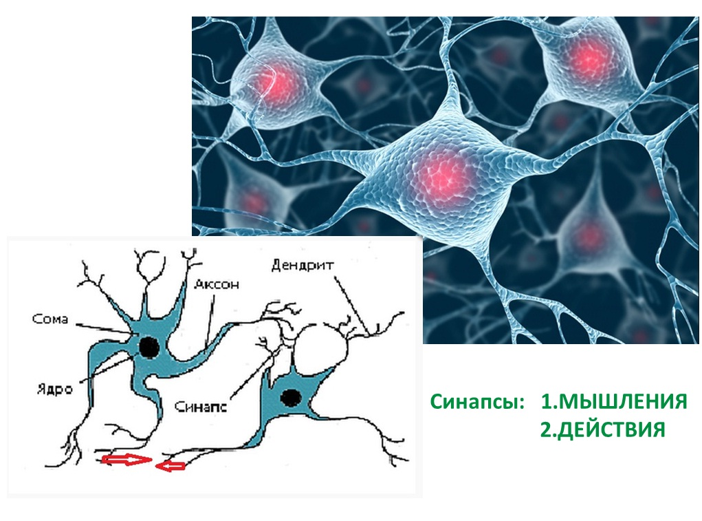 синапсы между нейронами