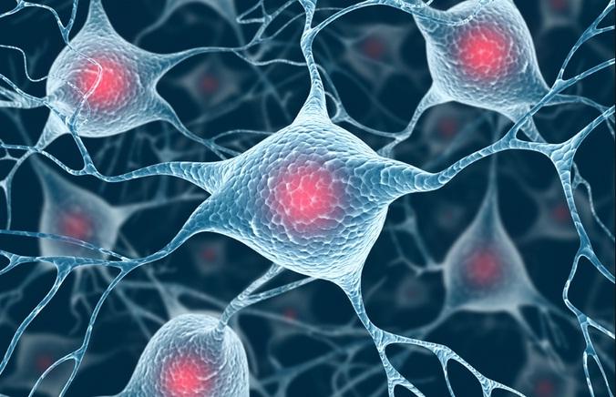 сеть нейронов
